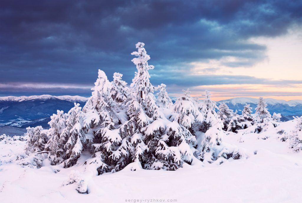 Fir-trees in the snow on a background of mountains