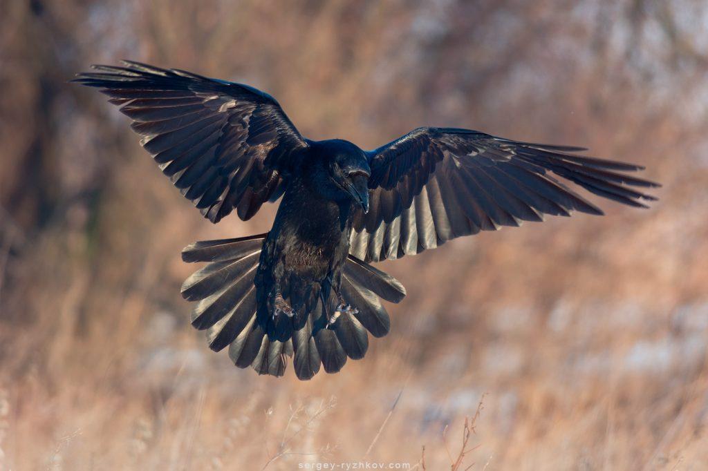 Птах у польоті. Bird is flying
