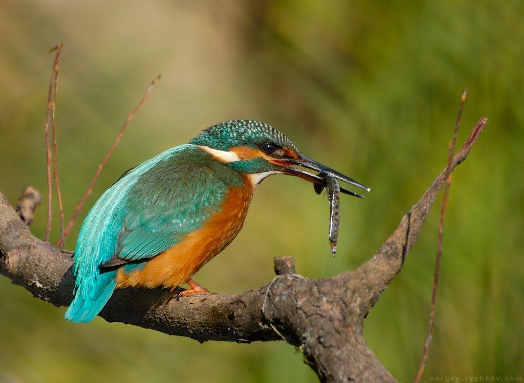 Рибалочка впіймав рибу