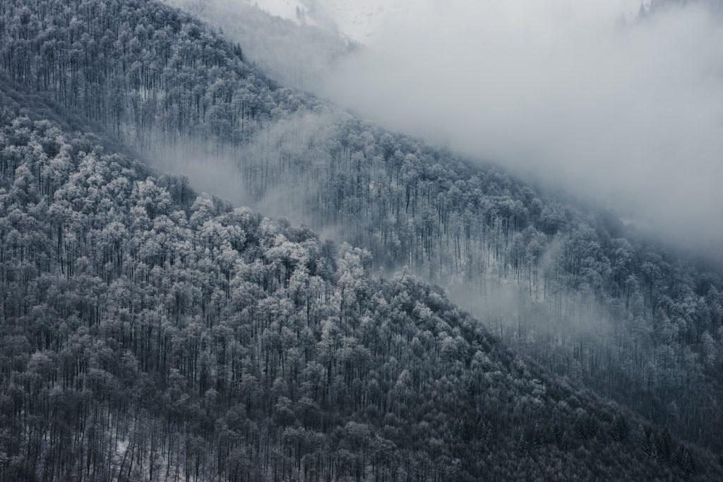 Буковий ліс зимою
