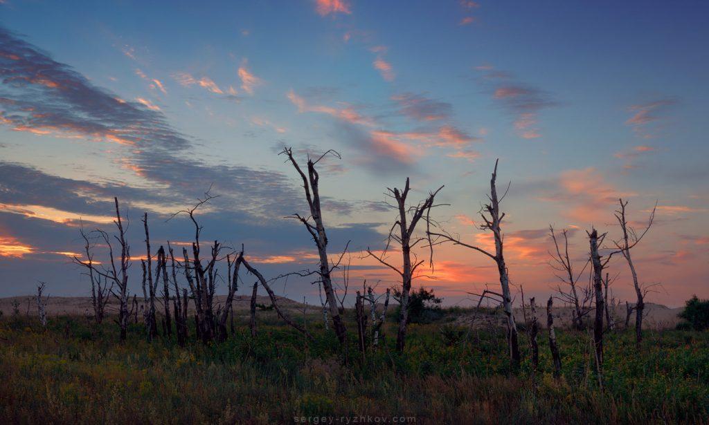 Мертві дерева на тлі вечірнього неба