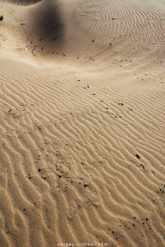 Фактура піску зі слідами тварини