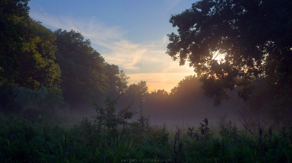 Самарський ліс оповитий легким туманом після дощу
