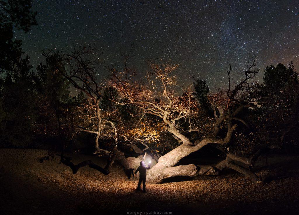 Я стою з ліхтарем біля старого дубу в нічному лісі