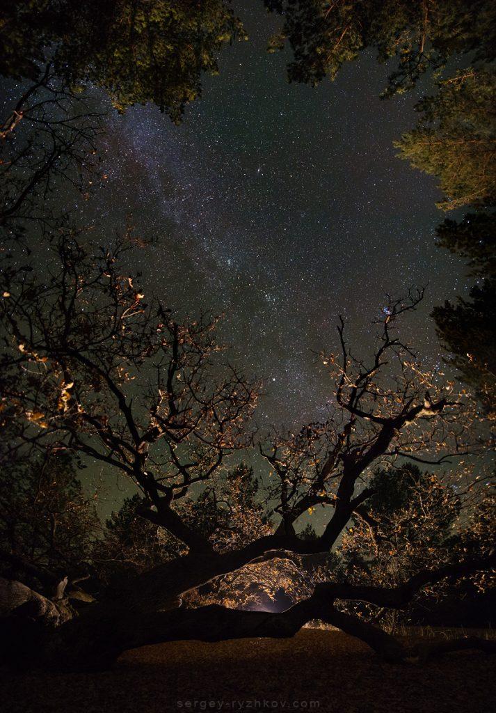Зоряне небо над старими деревами Самарського лісу