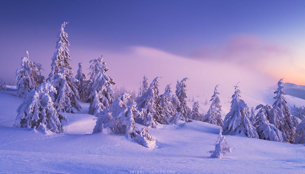 Сутінки, зимовий ліс, туман