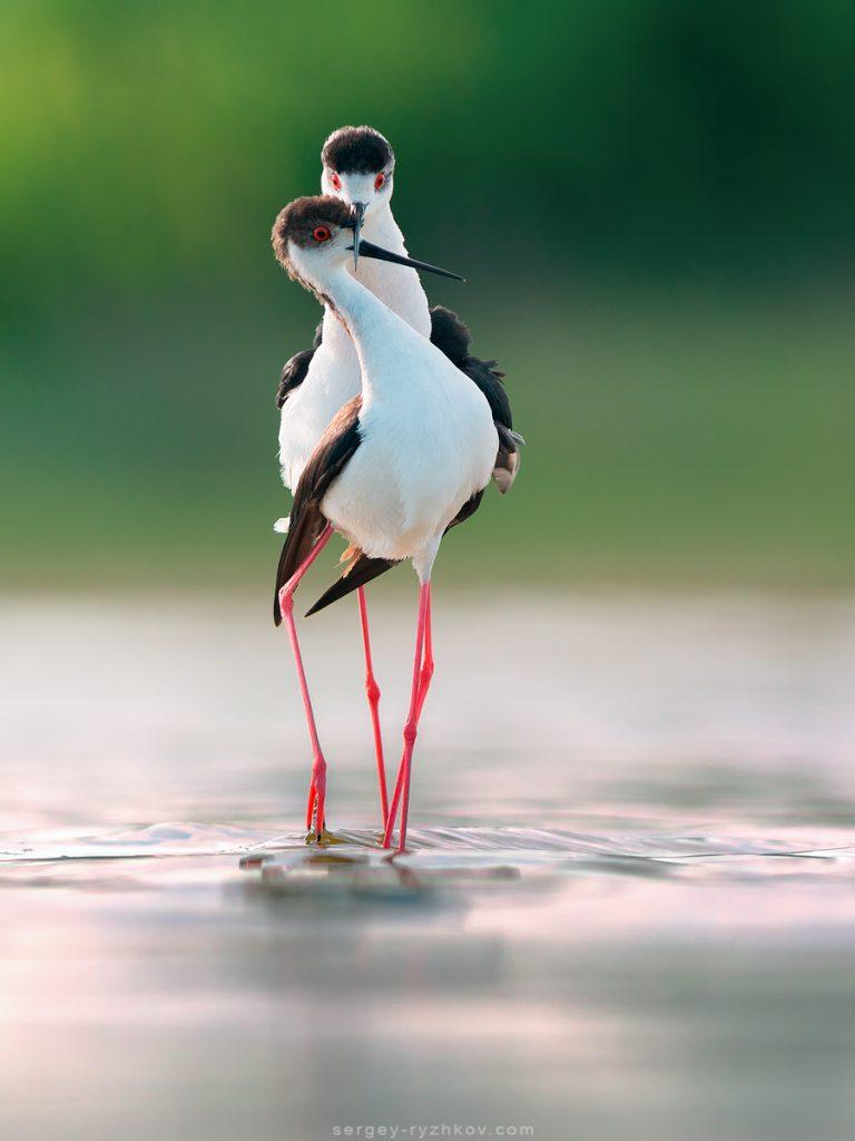Ніжні момент із життя птахів