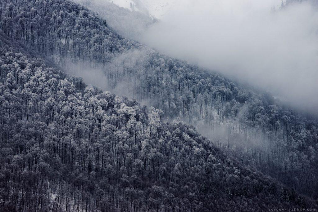 Вид на зимовий буковий ліс у туманах