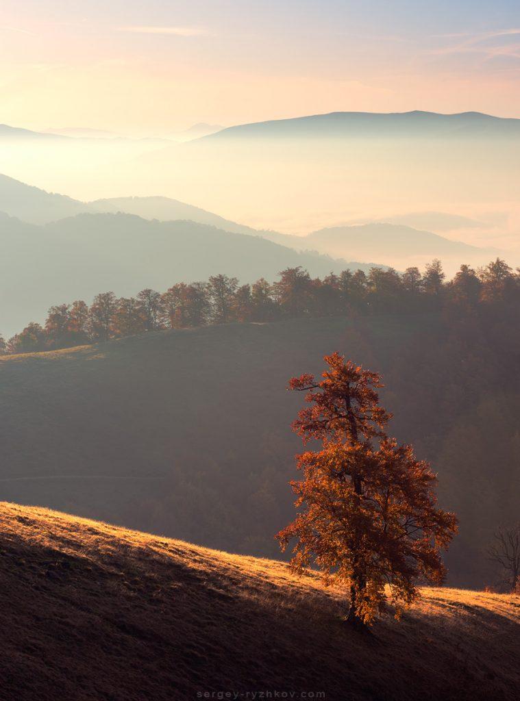 Одинокий осінній бук на схилах полонини