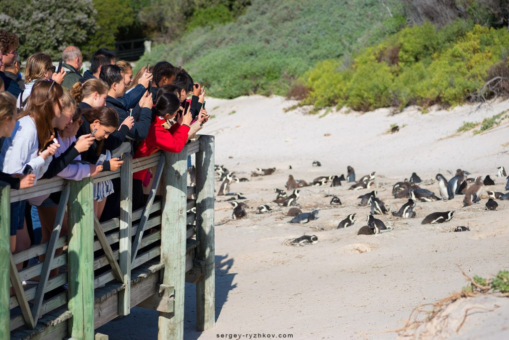 Туристи фотографують пінгвінів на пляжі Boulders Beach
