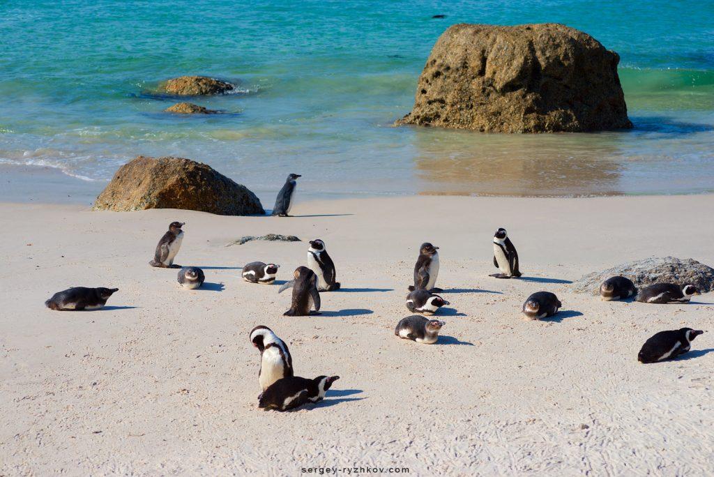 Африканські пінгвіни на пляжі Boulders Beach