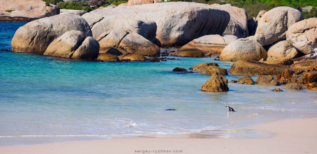 Пінгвін серед каменів на пляжі Boulders Beach