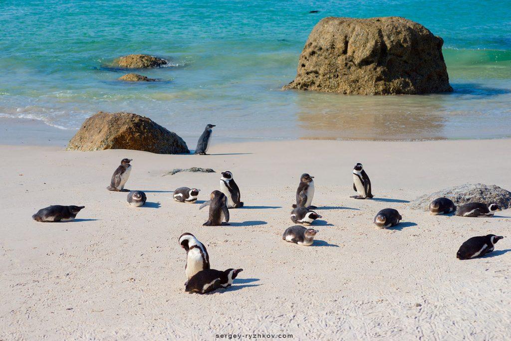Пінгвіни на піску