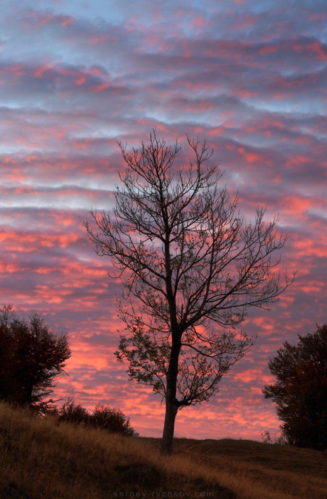 Дерево на фоні червоних хмар