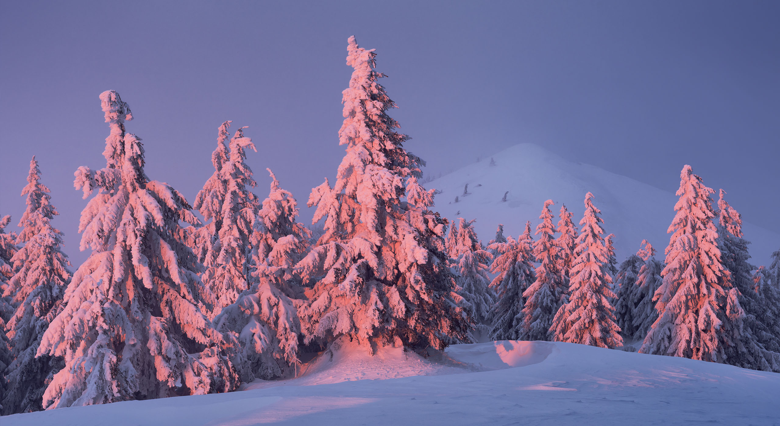 Winter evening in Carpathians