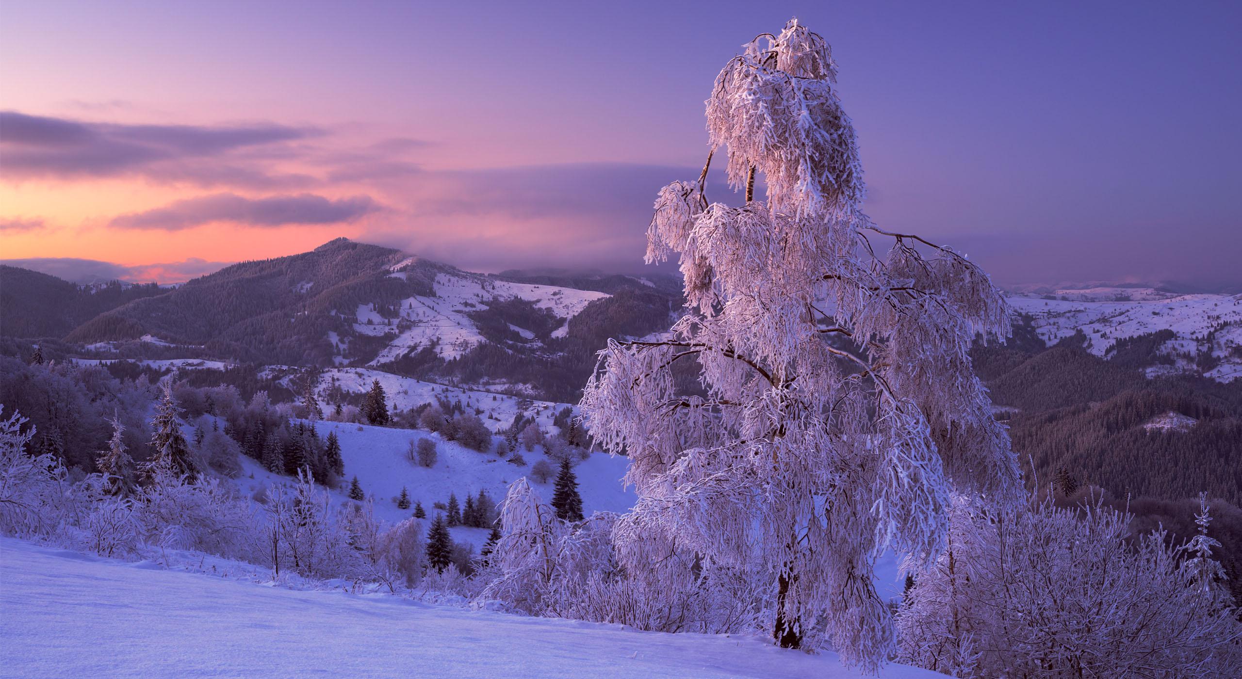 Буковина. Зимовий пейзаж