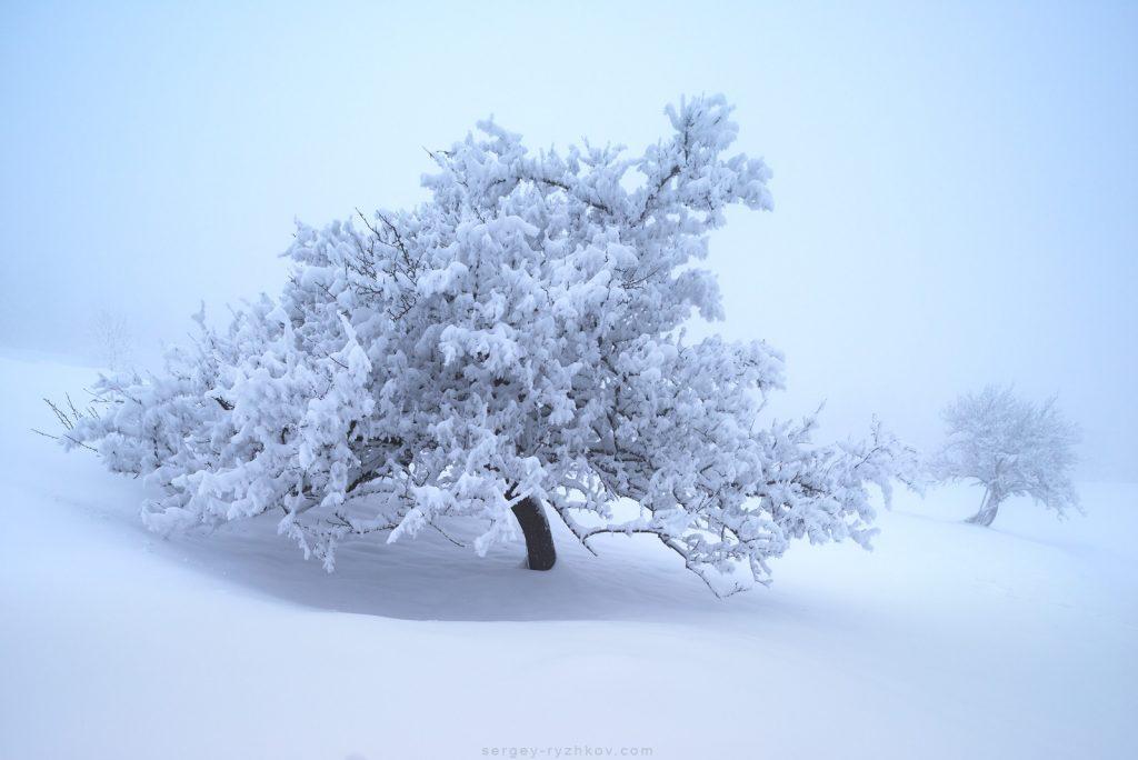 3. Поодинокі дерева в тумані. Покутщина