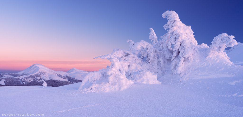 Засніжені смерека під вершиною гори
