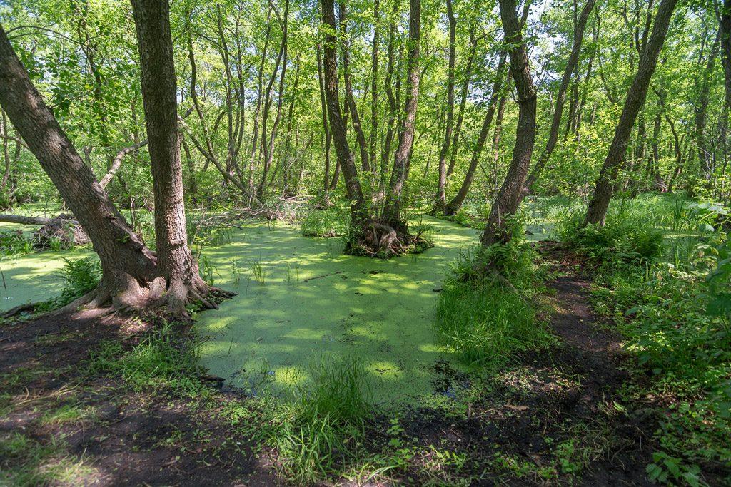 Вільхове болото на Кінбурні