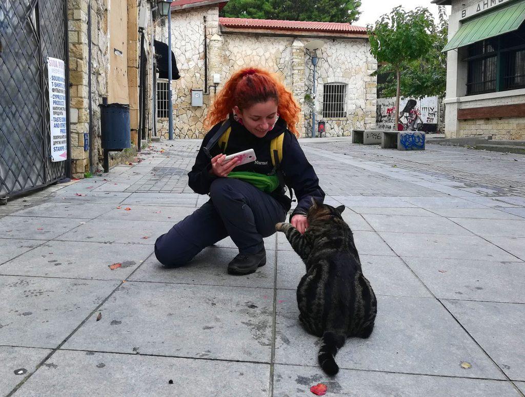 На Кіпрі багато вуличних котів