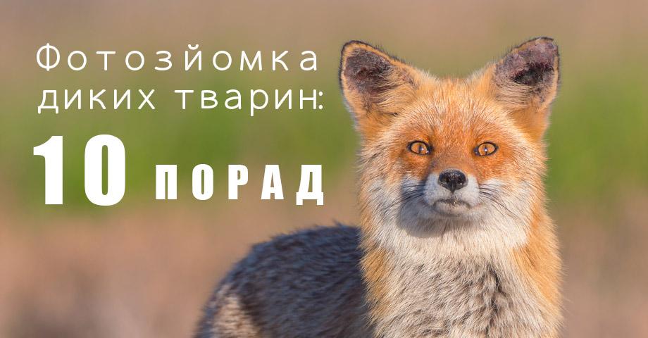 Як фотографувати тварин у дикій природі?