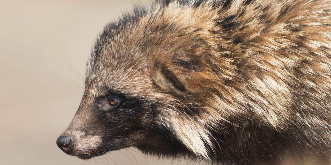 10 порад: фотозйомка диких тварин